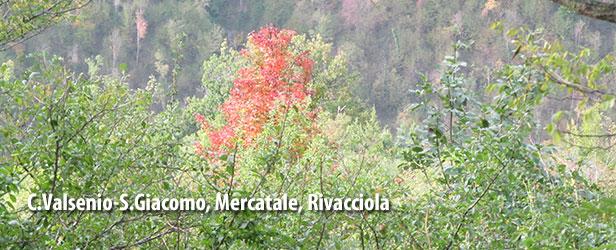 C.Valsenio-S.Giacomo,Mercatale,Rivacciola-4